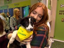 puppy-bowl-fluff-the-puppy-promo.jpg