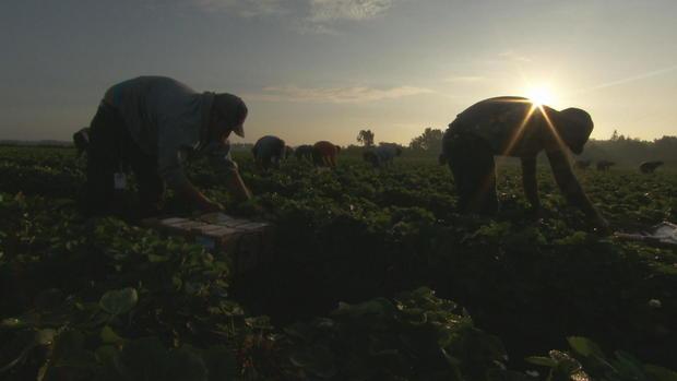 CTM-0424-草莓farmers.jpg