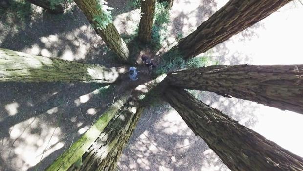 红杉,李考恩和-SAM-霍德功能于丛林-的树-620.jpg