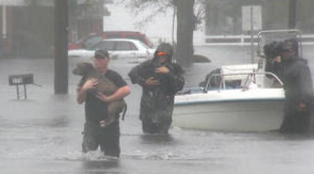 宠物rescue.png