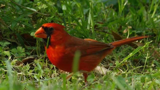 cardinal-judith-lehmberg-promo.jpg