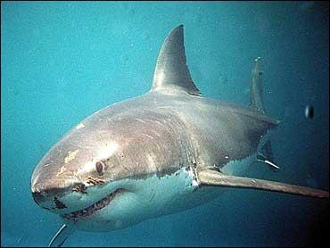 Terrifying Aquarium Shark Plunge - CBS News