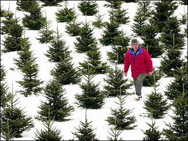 The Science Of Christmas Trees