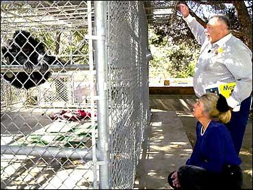Chimp Mauling Under Investigation - CBS News
