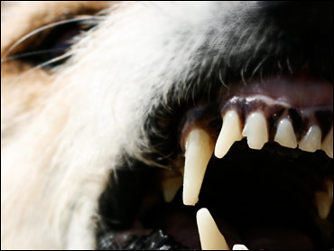 If Aggressive Dog Threatens You, Know What to Do - CBS News