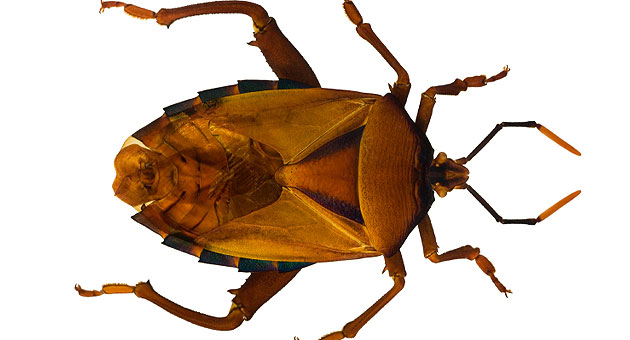 Bedbugs Movie Theater Invasion What S Their Next Target Cbs News