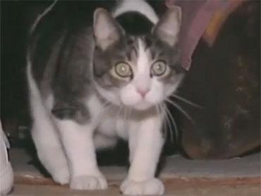 Jury Duty Cat: Why a Viral Story Is a Media Fail - CBS News