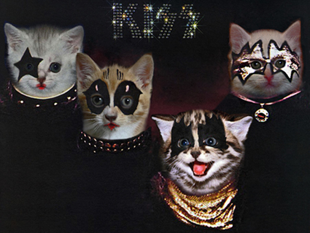 kittenmind nirvana nevermind the kitten covers albums re imagined with cats pictures. Black Bedroom Furniture Sets. Home Design Ideas