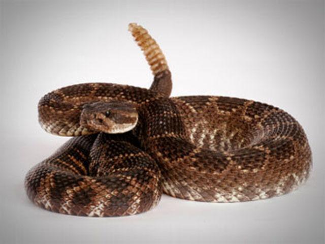 Rattlesnake selfie