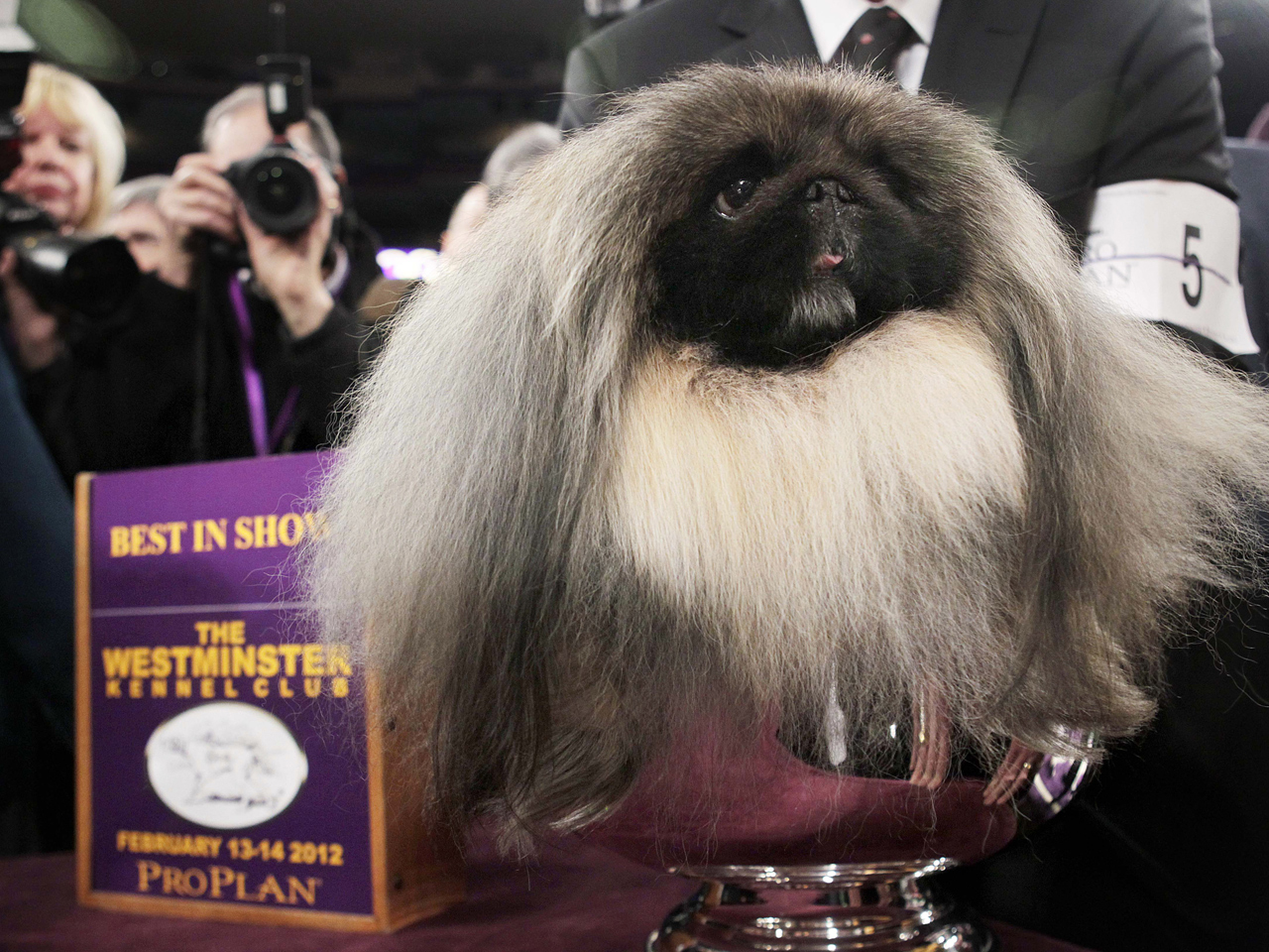 Watch Westminster Dog Show In Canada