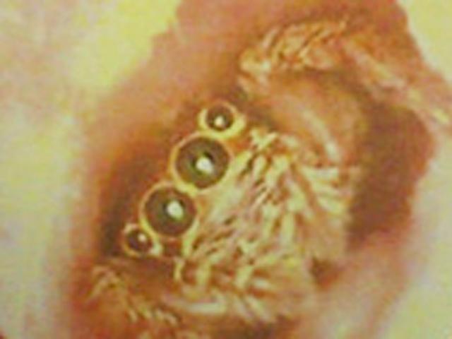 view Луковичные цветочно декоративные растения открытого грунта