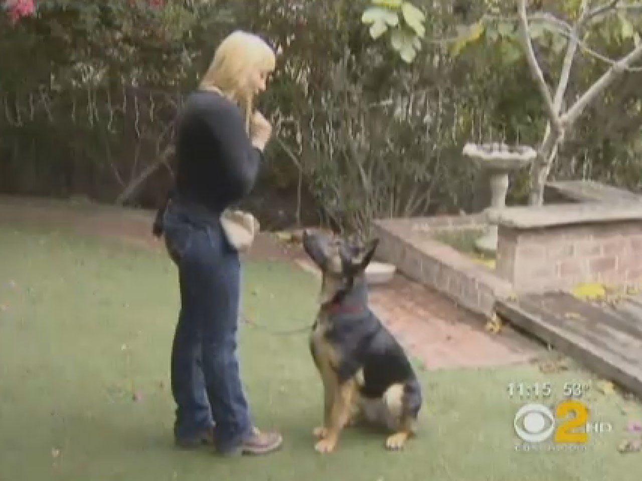 Doctor Dogs Being Trained To Sniff Out Ovarian Cancer Cbs News