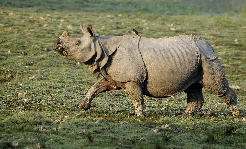 Image Result For Dua National Parka