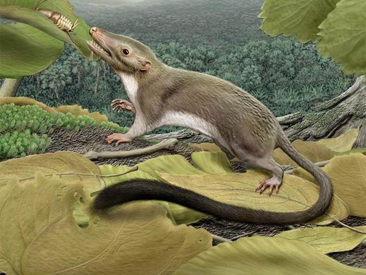 man s oldest ancestor identified by scientists cbs news