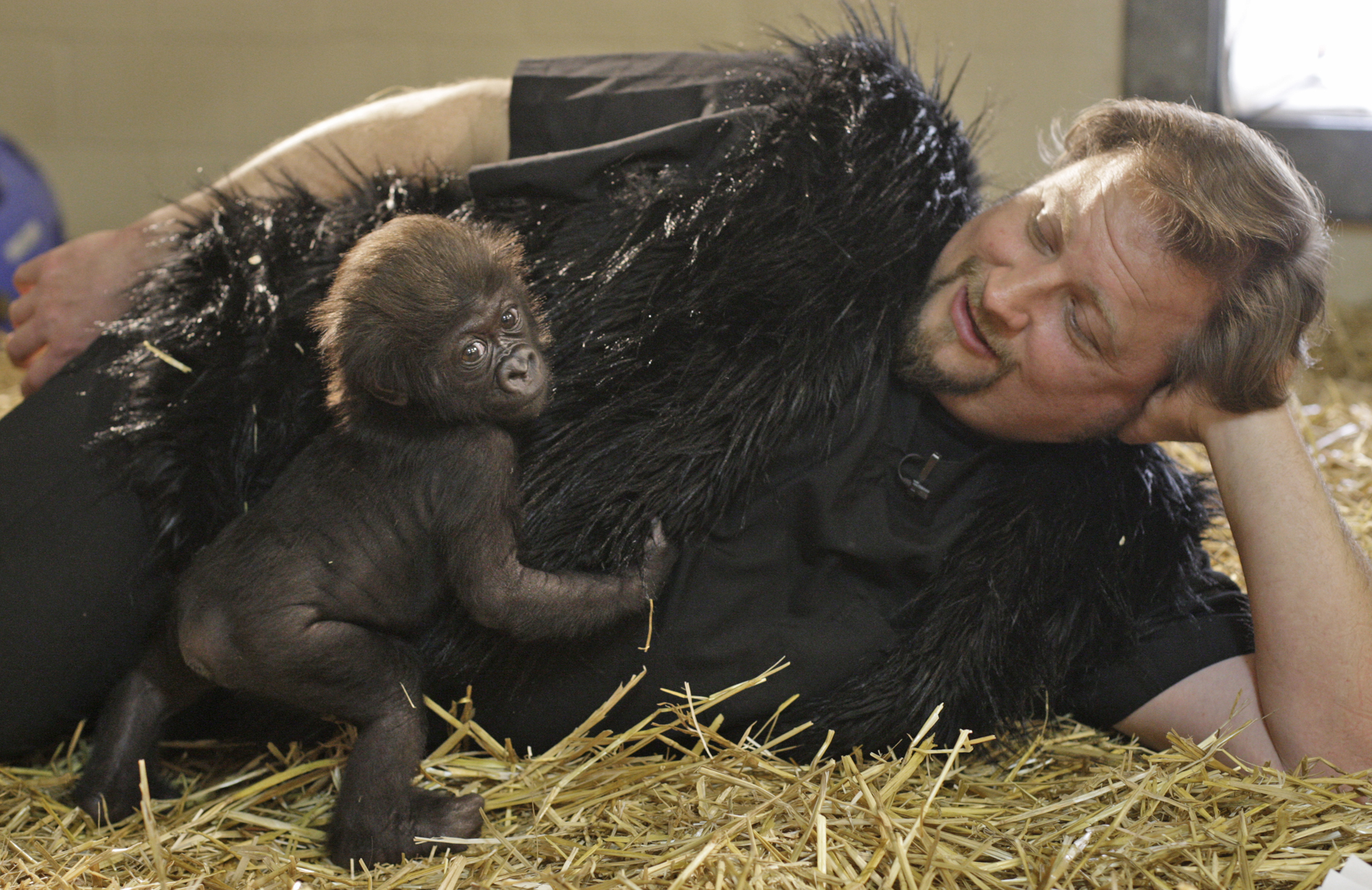 Baby Gorilla Thrives With Human Surrogates In Ohio Cbs News