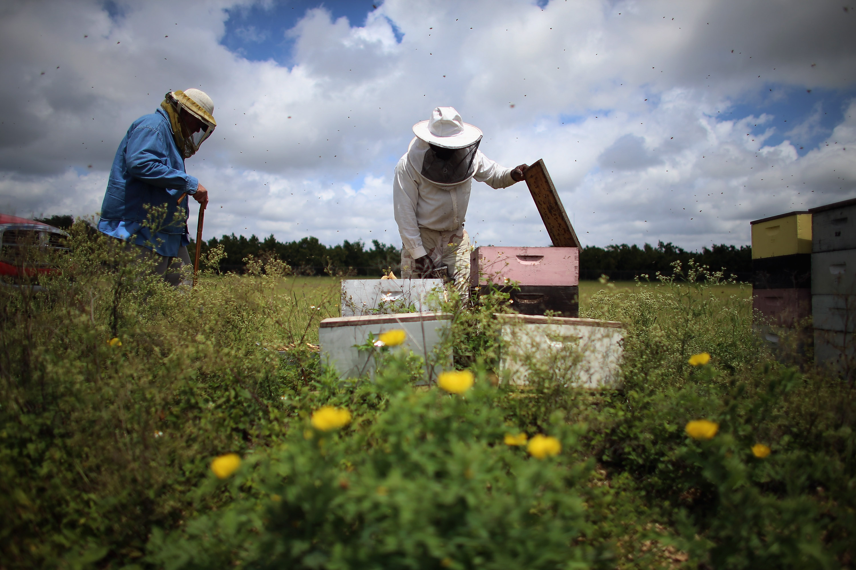 What's killing the honey bees? Mystery may be solved - CBS News