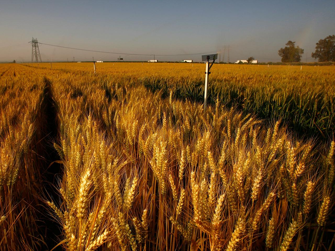The Latest Updates on the 2018 Farm Bill – Farm Aid