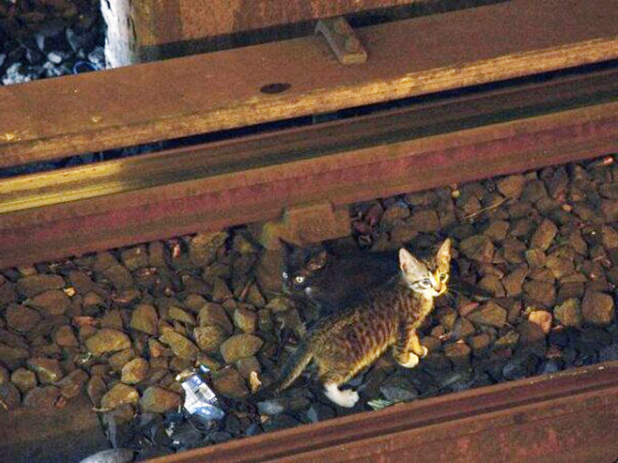 cat vs train
