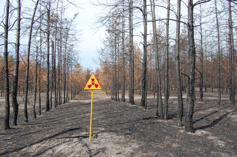 After 30 years, Chernobyl trees barely decomposed, study