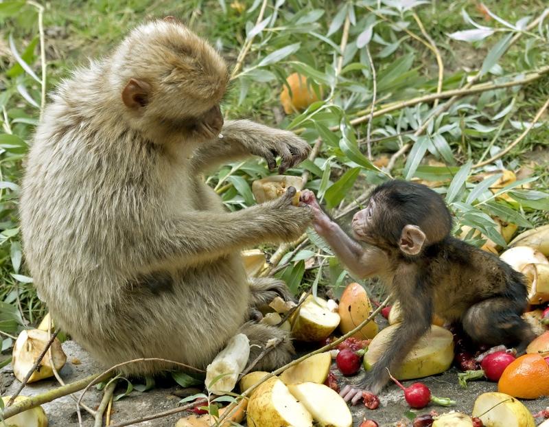 Examples List on Primates