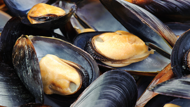 Mussels off the coast of Seattle test positive for opioids - CBS News