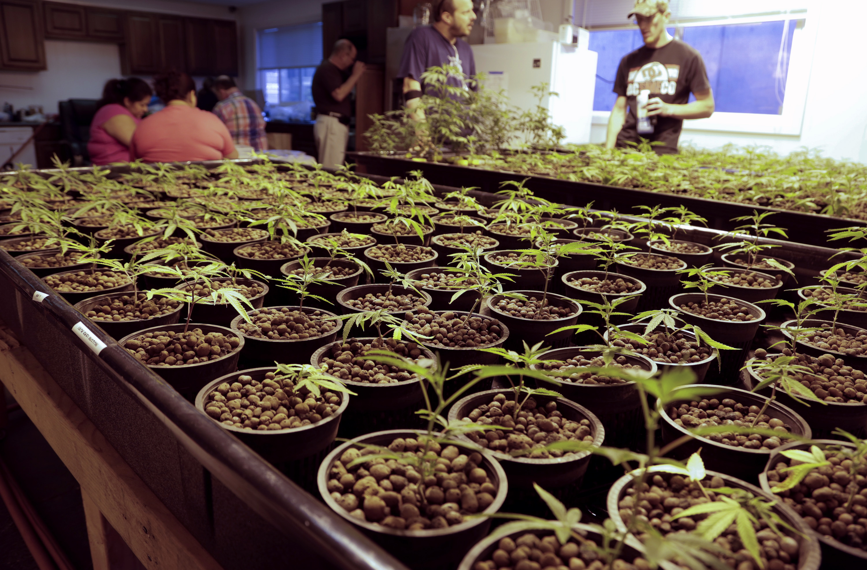 Sensational No Welfare For Weed Bill Passes In The House Cbs News Download Free Architecture Designs Scobabritishbridgeorg