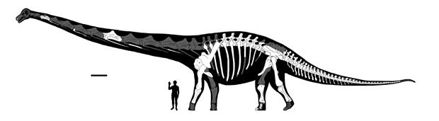 dreadnoughtus-proportions.jpg