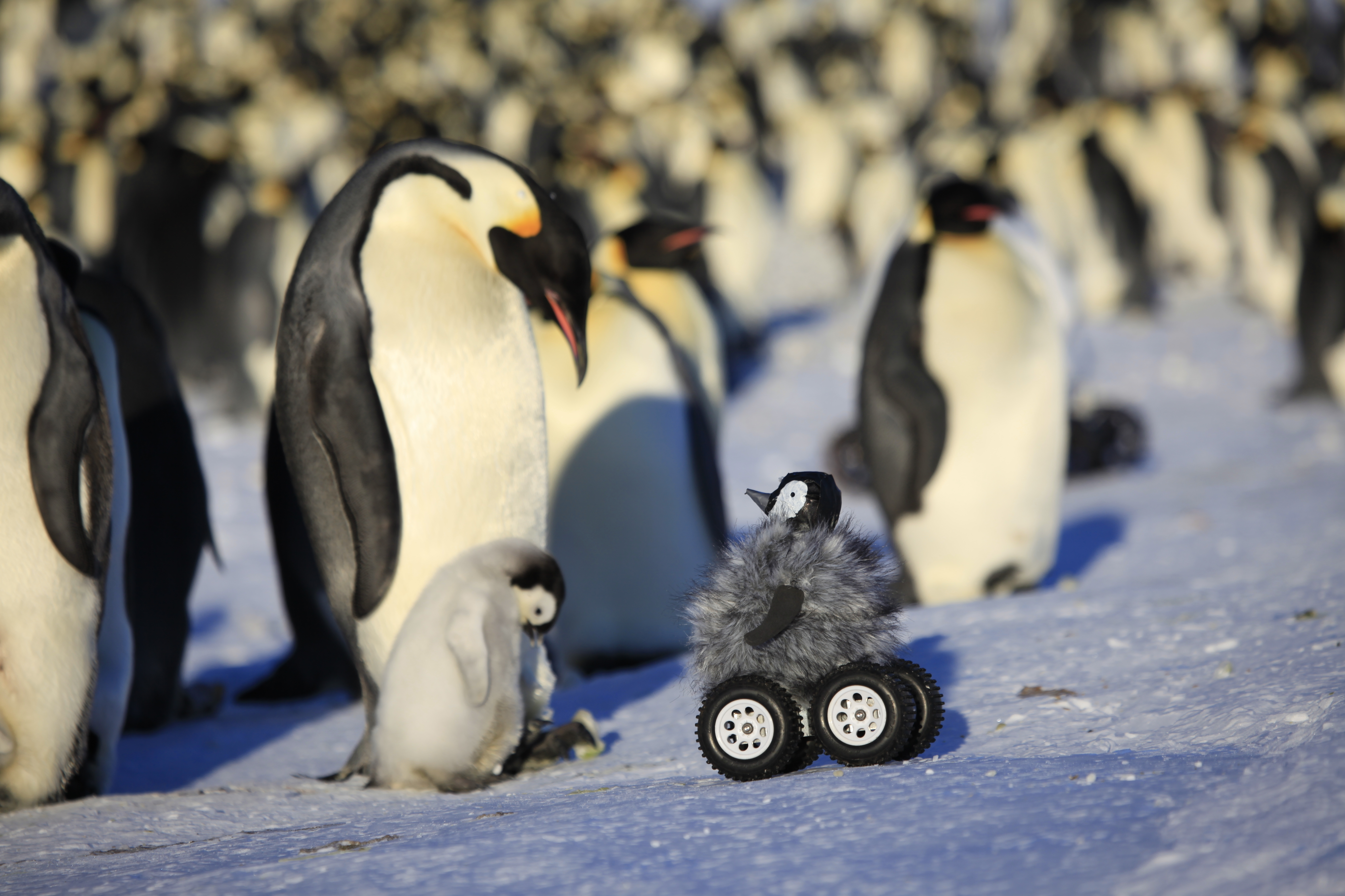 Adorable Robotic Penguin Chick Spies On Colonies Cbs News