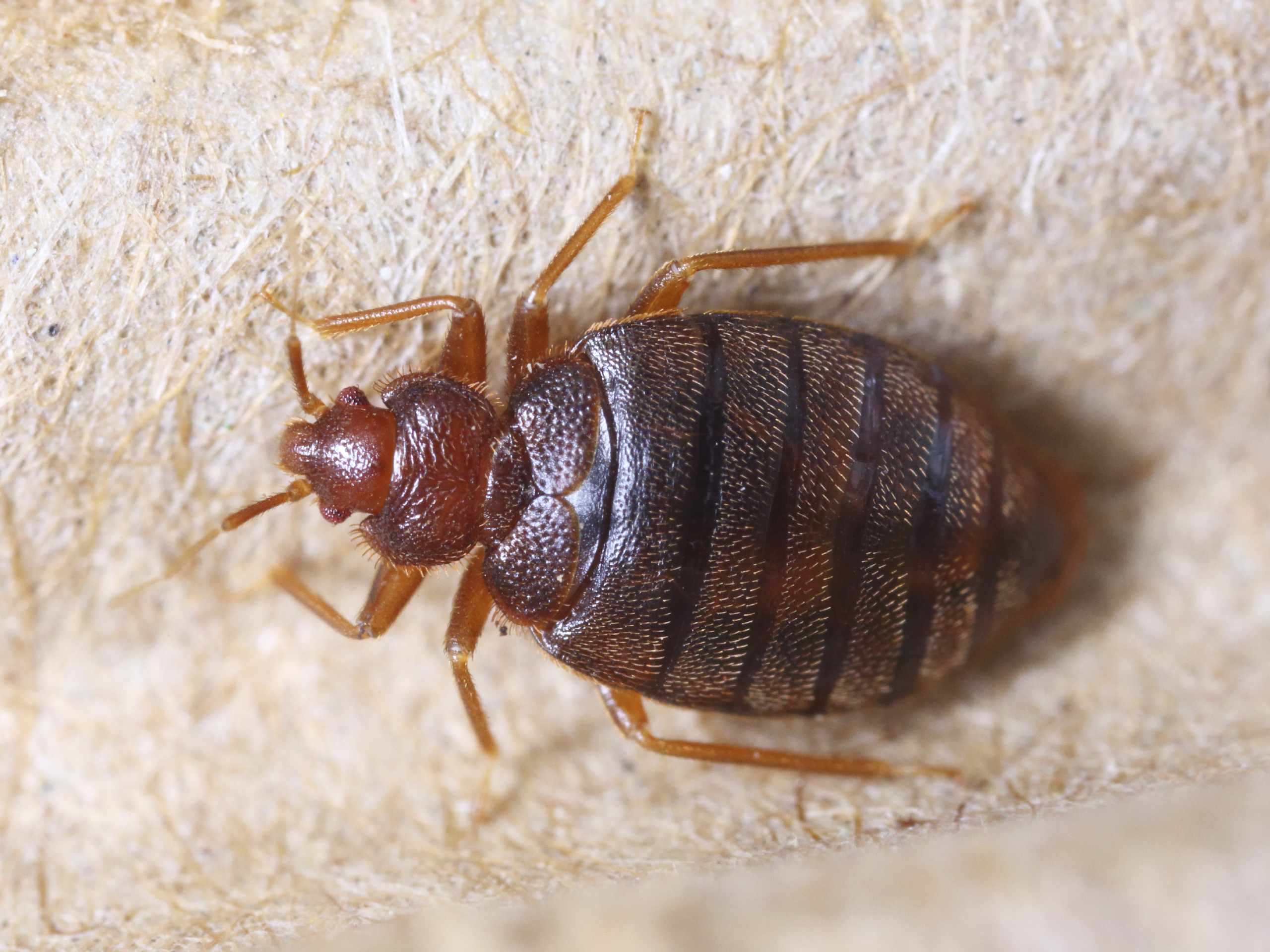 These Are The Worst U S Cities For Bedbugs Cbs News