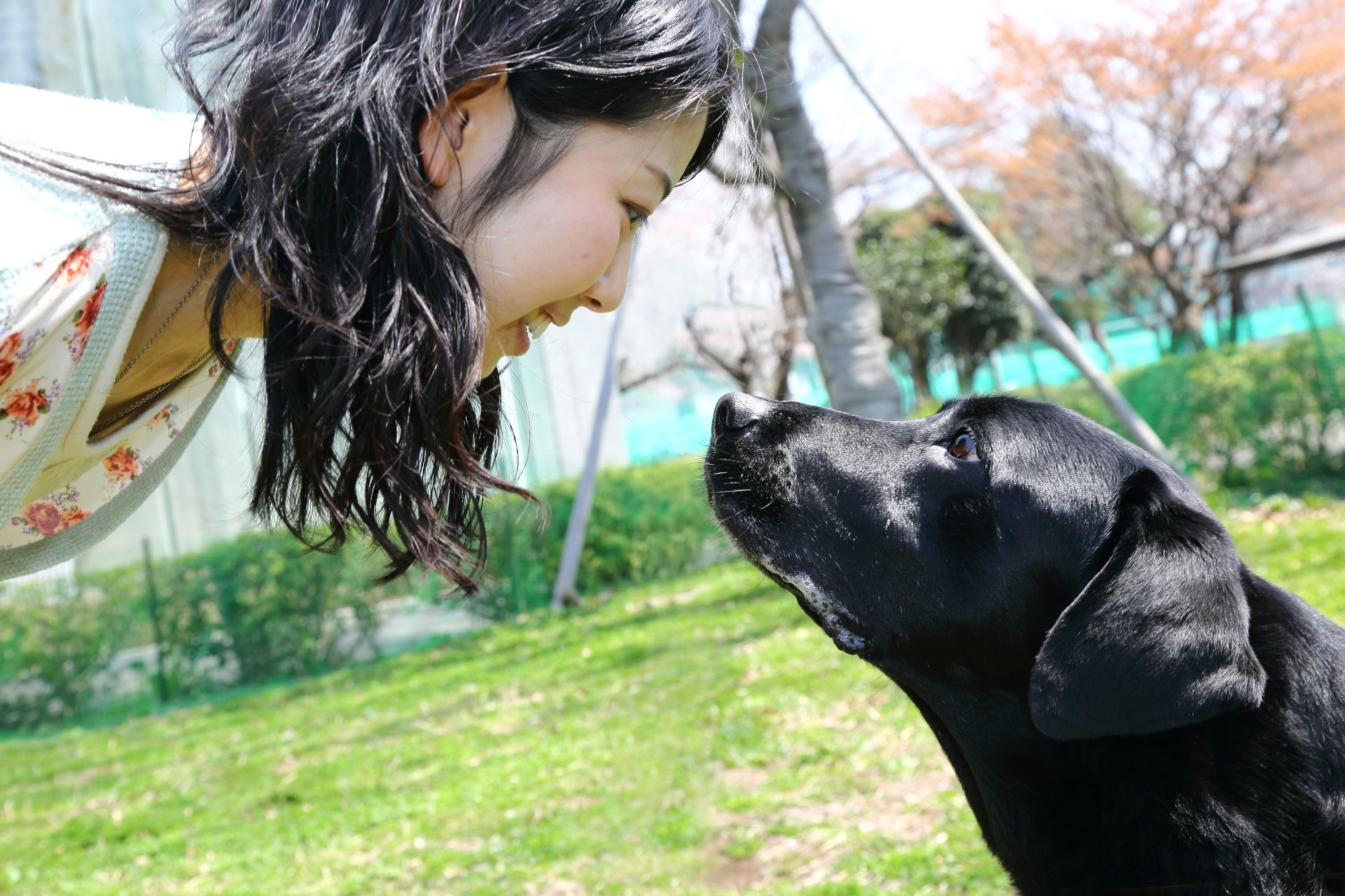 Dogs and people bond through eye contact - CBS News