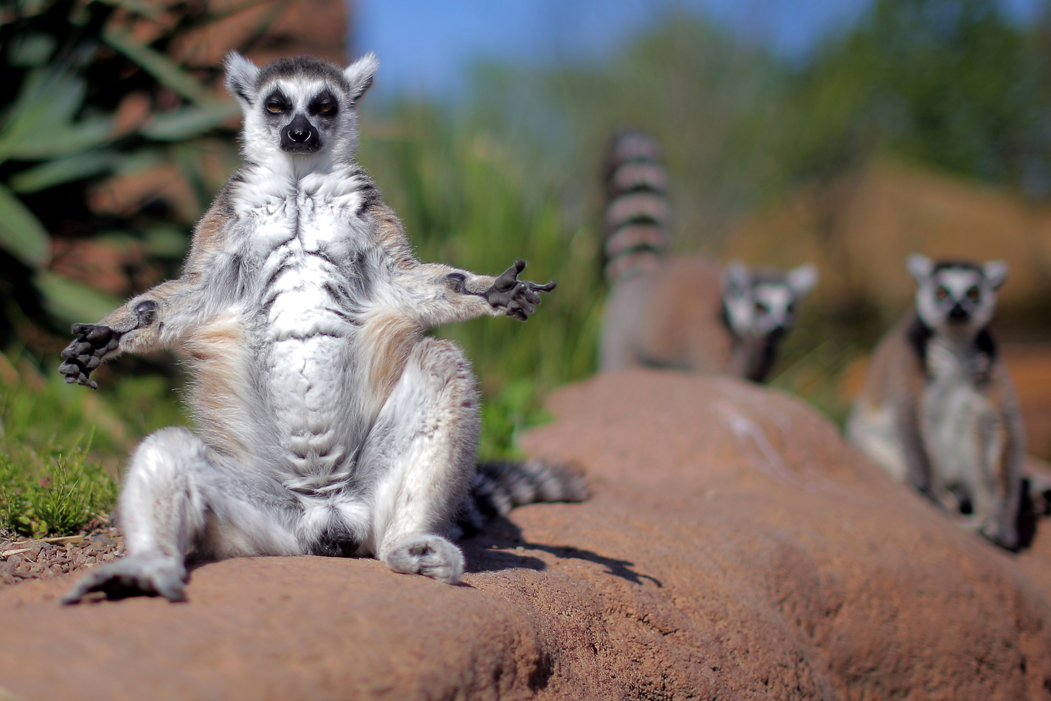 Lemur Island Florida
