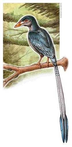 flashy-tail-bird-vertical-enantiornithes-art-gabriel-lio250.jpg