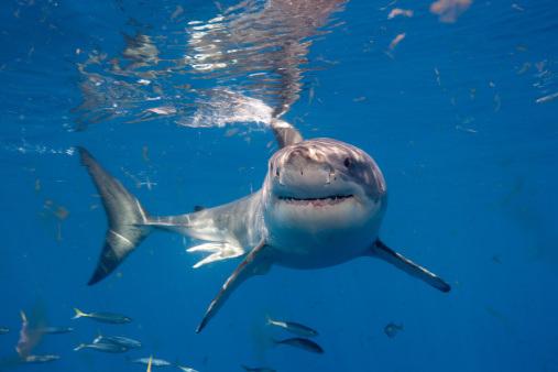 Shark Attacks Shark Attacks Pictures Cbs News