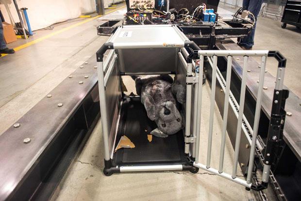 crash-test-dummy-dog.jpg