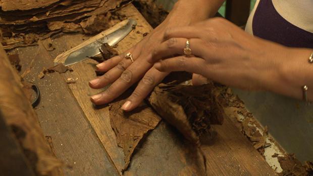 cuban-cigar-factory-tobacco-620.jpg