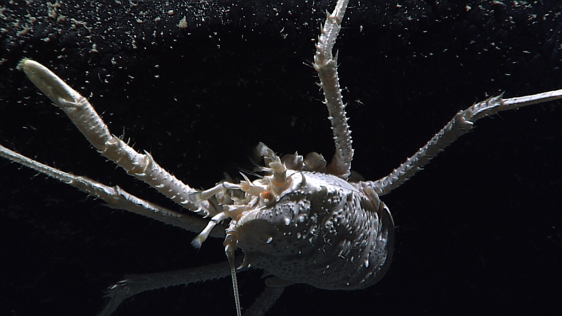 sea star feeding amazing deep sea creatures of hawaii pictures