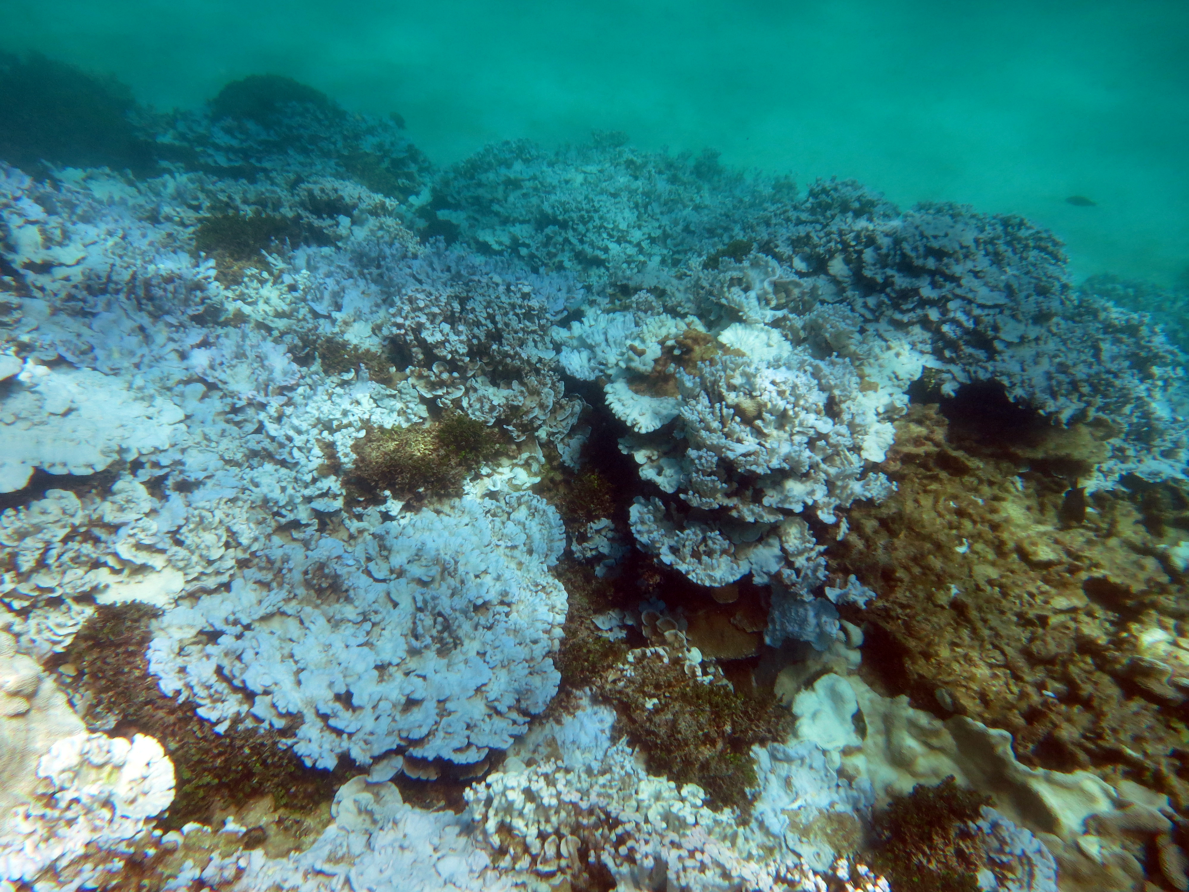 coral bleaching crisis spreads worldwide and it s getting worse