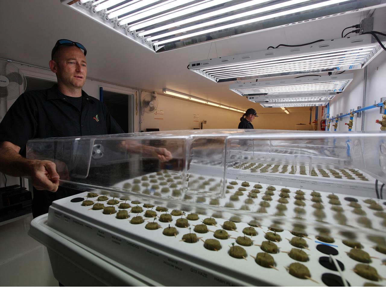 South Dakota tribe with big marijuana ambitions torches crop