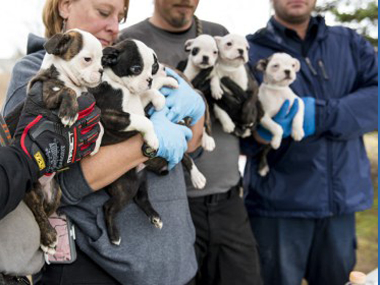 More than 50 dogs rescued in Michigan puppy mill raid - CBS News