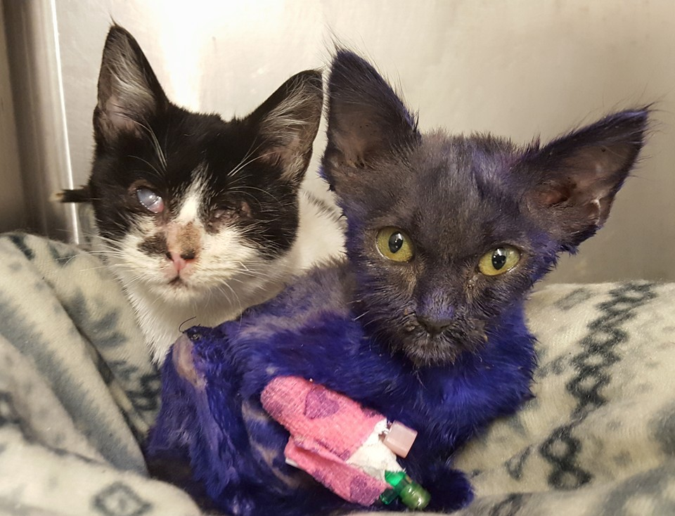 Hard-luck kitties bond after past abuse - CBS News