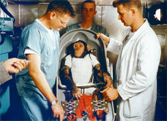 ham-the-chimp-mercury-nasa-244.jpg
