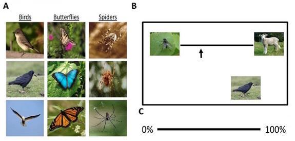 spider-study.jpg