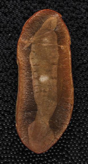 holotype-fossil.jpg