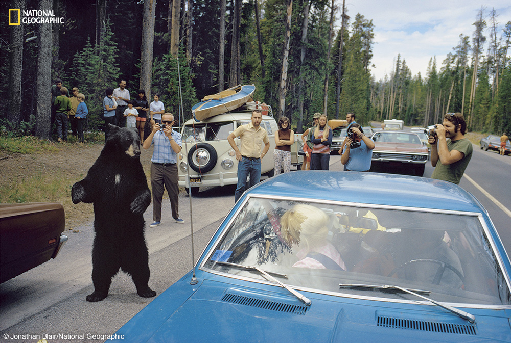 Yellowstone National Park National Geographic Explores