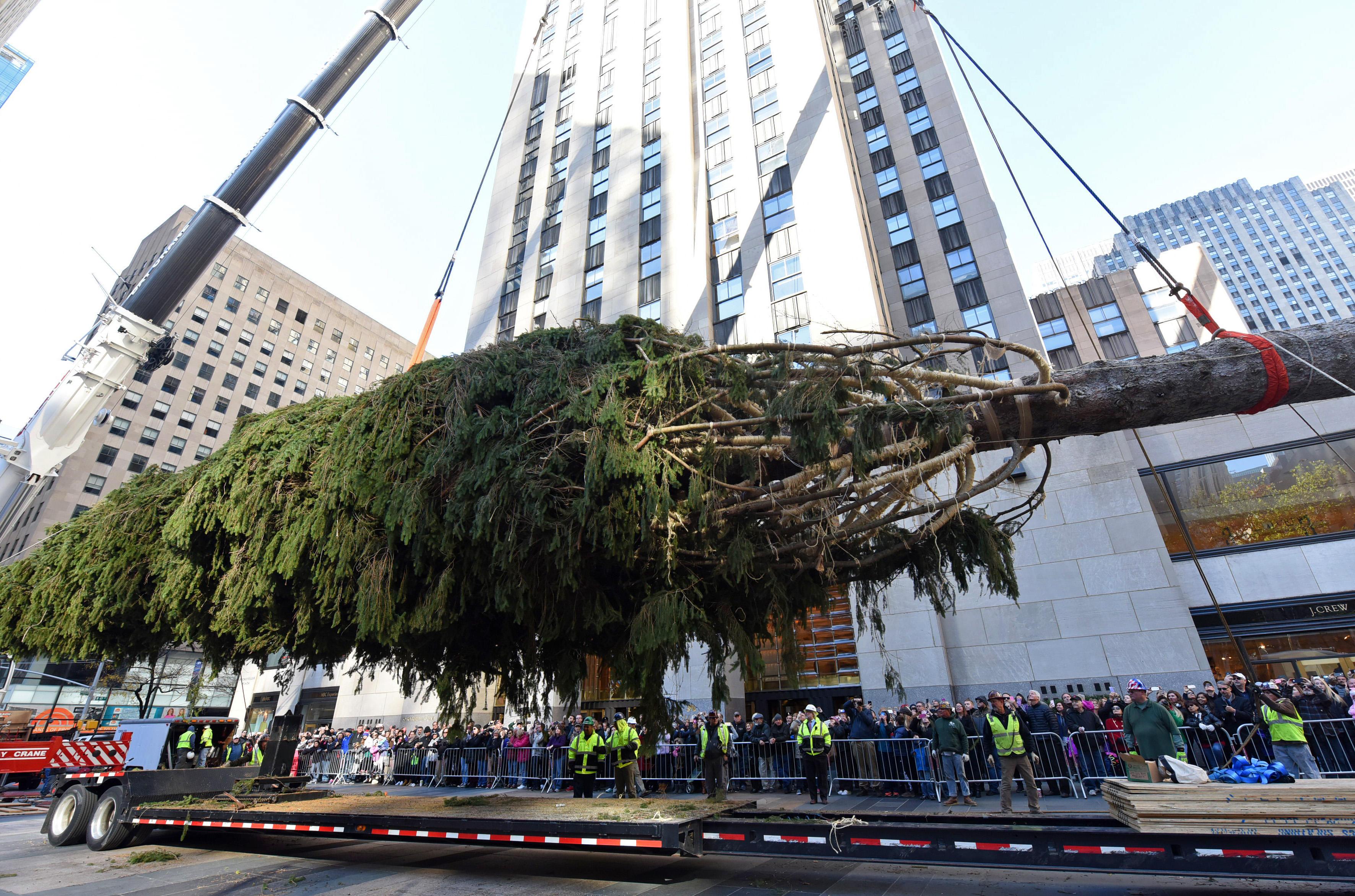rockefeller center christmas tree arrives in nyc cbs news rockefeller center christmas tree arrives in nyc cbs news