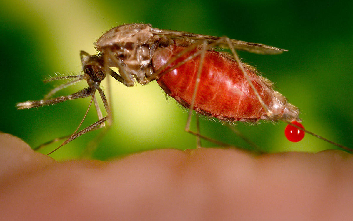 genetically modified mosquitoes considered in houston texas to rh cbsnews com