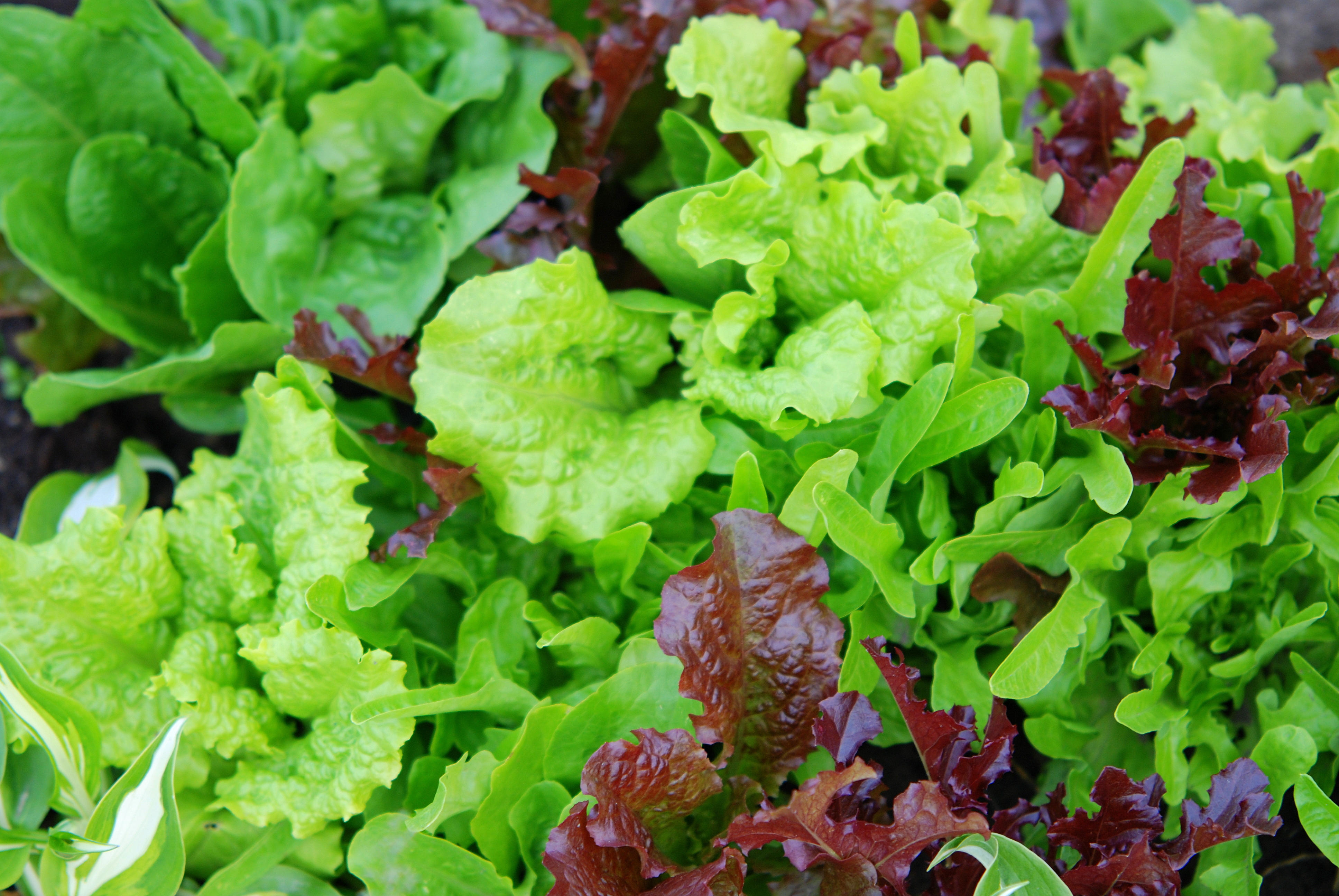 Bagged Salad Can Raise Salmonella Risk Spread Food Poisoning Cbs News
