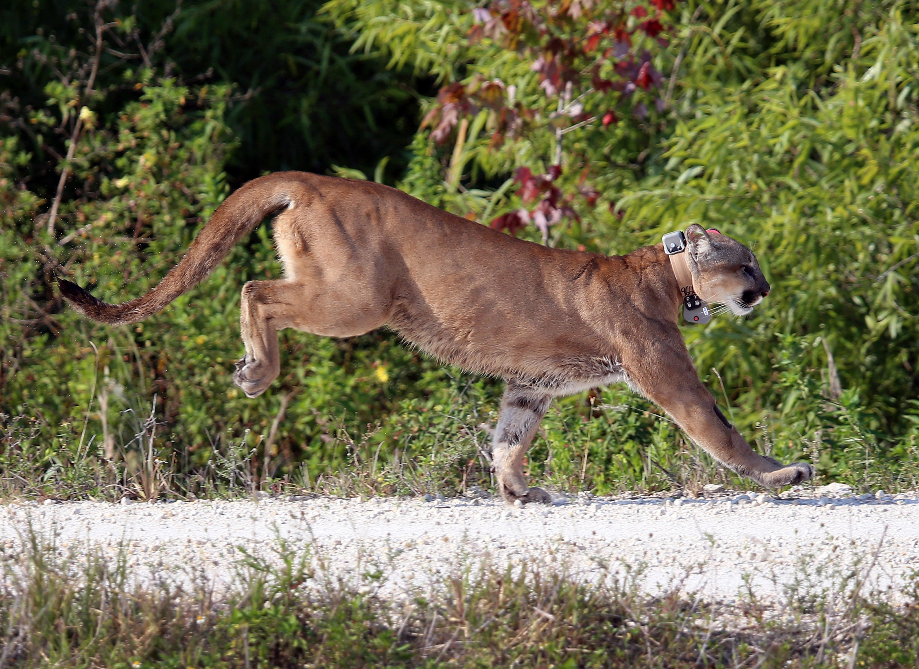 florida panther View the latest florida panthers news, scores, schedule, stats, roster, standings, players, fantasy leaders, rumors, videos, photos, injuries, transactions and more.