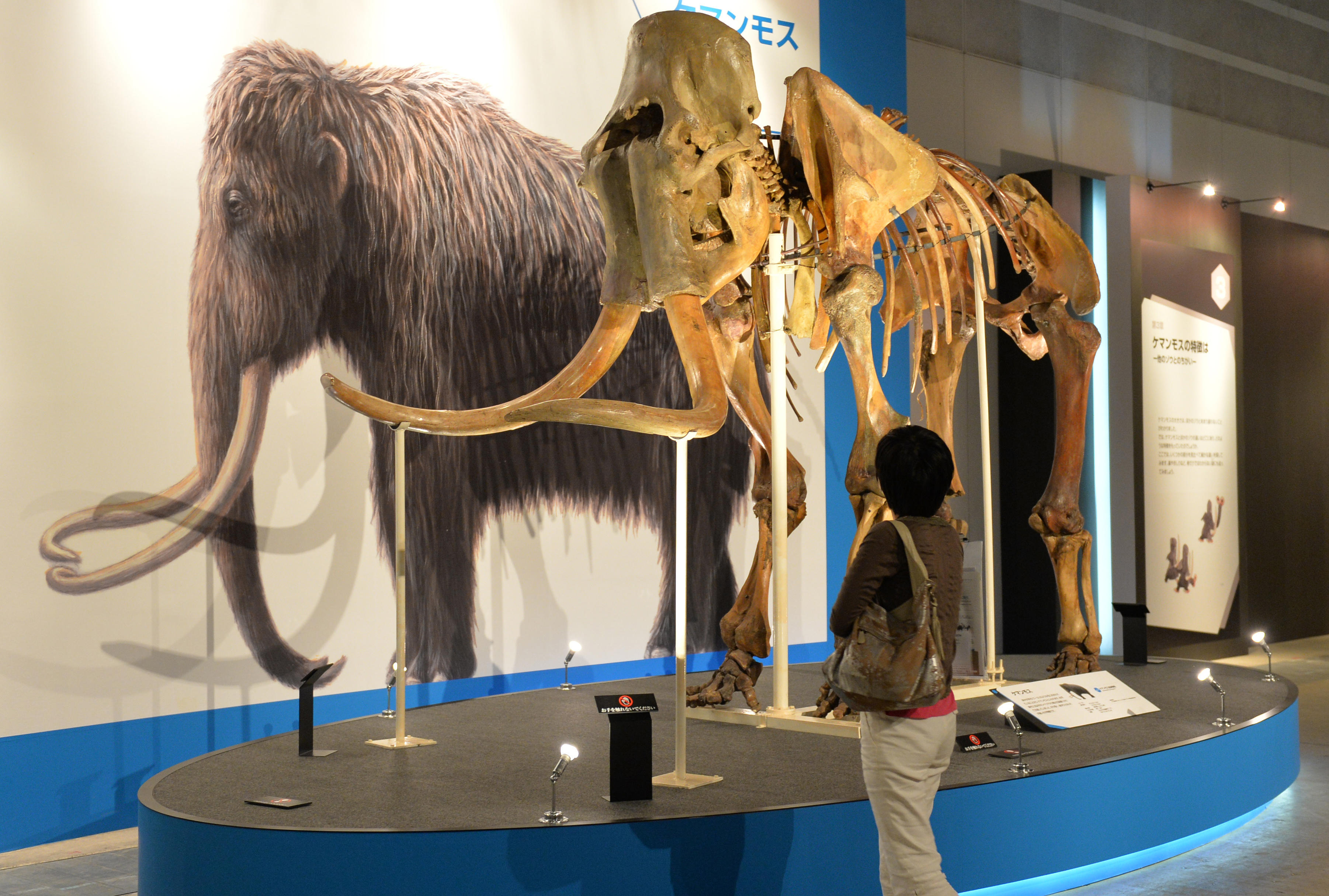 454d4c43e00 Harvard scientists aiming to bring back the woolly mammoth - CBS News