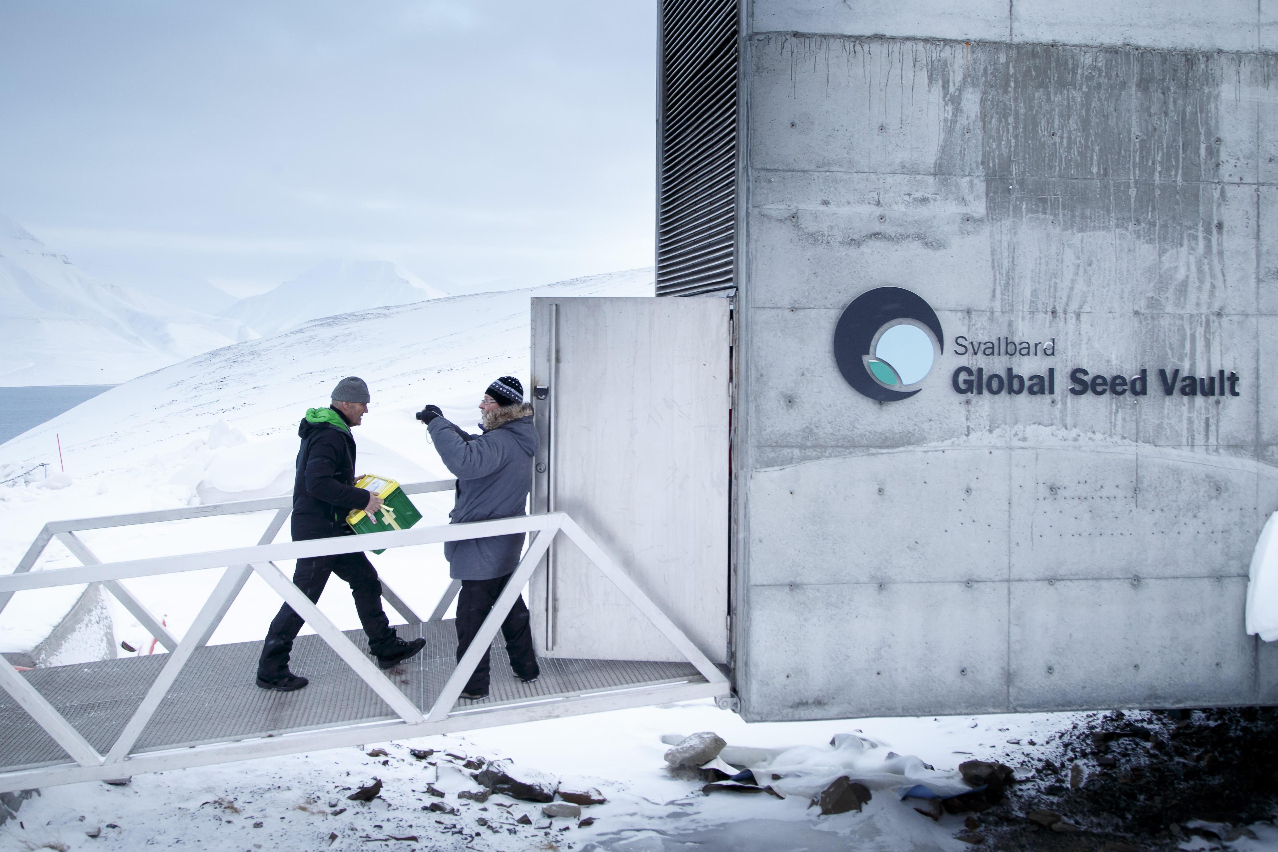 Arctic Doomsday Seed Vault Receives 50 000 New Deposits Cbs News